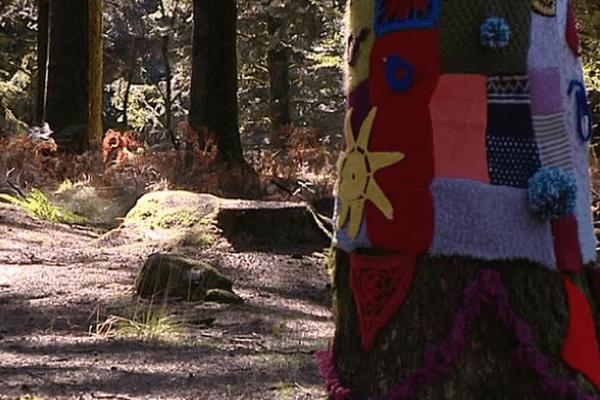 F3 Limousin - Du Yarn Bombing en forêt de Chabrière ou l'art d'habiller les arbres avec du tricot