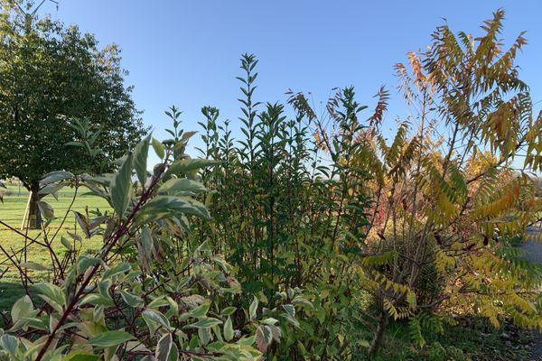 Haies et arbustes à fruits peuvent être multipliés.