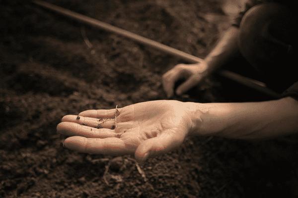 Cultivons nos racines, un webdocumentaire de Natureparif qui fait la part belle aux jardiniers de la région Île-de-France.