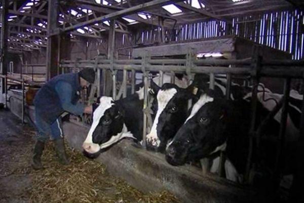 Thierry Charuel soupçonne la ligne à Très-Haute-Tension de nuire à la santé de son troupeau. Il a décidé de reconvertir son exploitation.