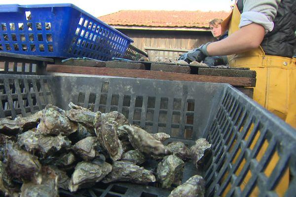 Ces huîtres sont certifiées BIO, une première pour le Bassin d'Arcachon.