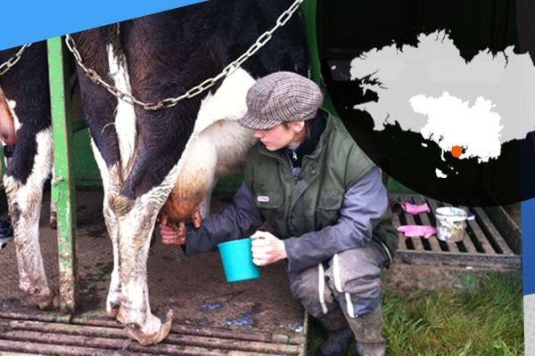 Violaine traie les vaches de son exploitation sur l'île d'Arz