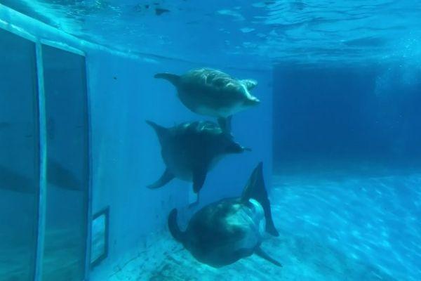 Les 8 dauphins et les 5 otaries du parc Astérix vont être transférés dans d'autres parcs après la fermeture du delphinarium de Plailly dans l'Oise.