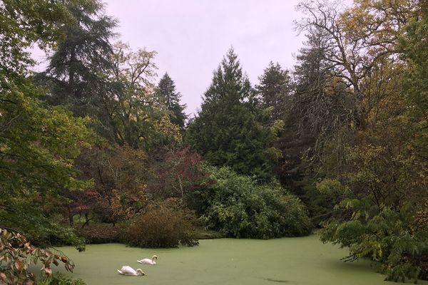 Des arbres encore plein de fruits et de grands chênes ont été touchés dans les intempéries. Des branches jonchent le sol et d'autres menacent encore de tomber.