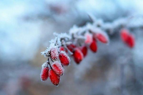 Les températures s'annoncent froides dans les prochains jours, prévient Météo France.