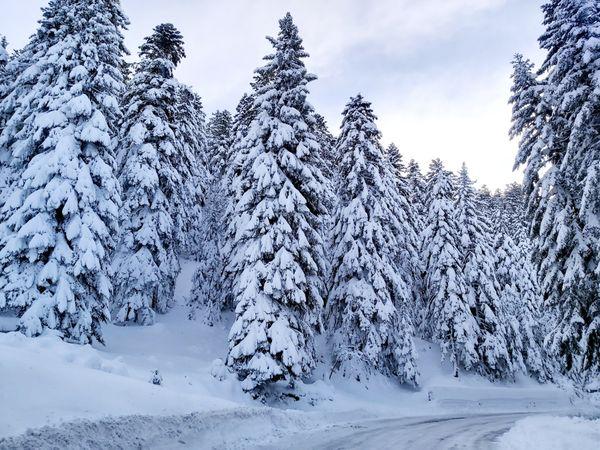 Route enneigée près de Peïra Cava en direction du Turini.