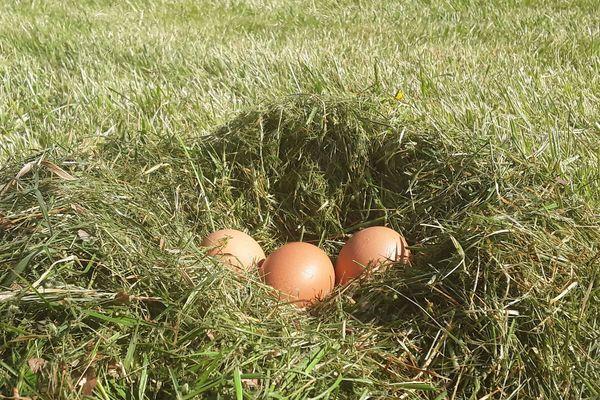 Les œufs, produit star pendant le confinement