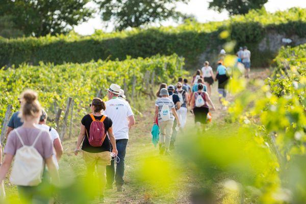 Des coteaux d'Ancenis à la Touraine, la VVR propose 18 balades œnologiques pour découvrir les vignobles du Val de Loire