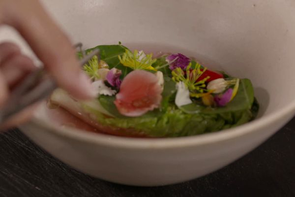 Tabata Mey est allée cueillir salade bio et plantes comestibles pour vous concocté cette recette de cœur de salade mariné, Kombucha et huile d'aspérule odorante. / © France 3/TV Only