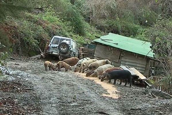 Ange Mouysset, éleveur porcin rencontre de nombreuses difficultés à trouver des terrains pour son exploitation. 21/12/19