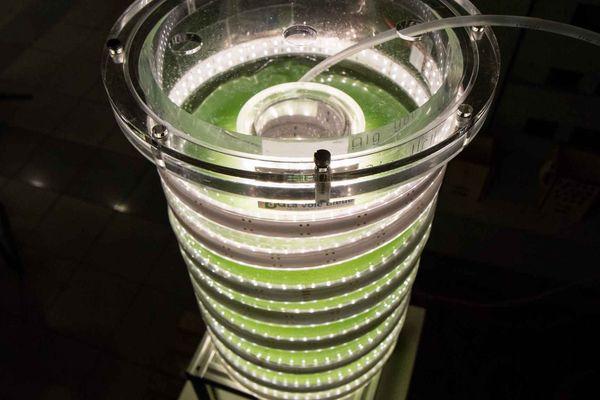 Haute d'une quarantaine de centimètres, la phytotière prend peu de place