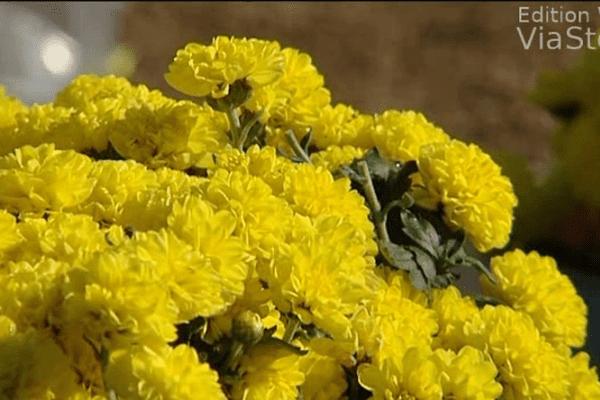 Toussaint  le chrysanthème au hit parade des fleurs les plus vendues
