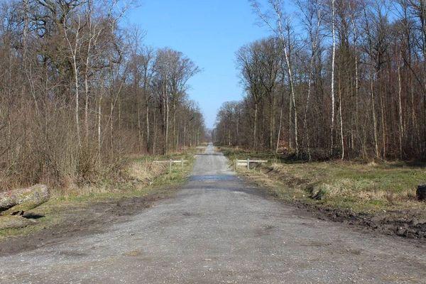 Des routes créées sans études d'impact, ouvertes en permanence, non surveillées. Braconnage et tas d'ordures au cœur de la forêt.