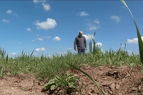 La sécheresse en Bretagne inquiète (avril 2017)