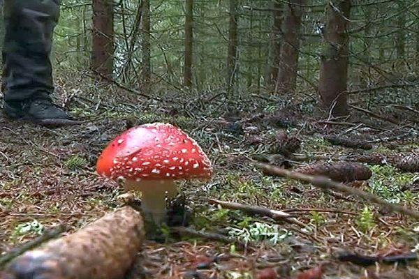 Lozère - les champignons sortent de terre - archives