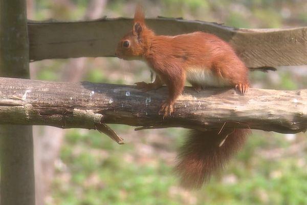 L'écureuil, très photogénique est revenu à plusieurs reprises sur la scène de shooting !