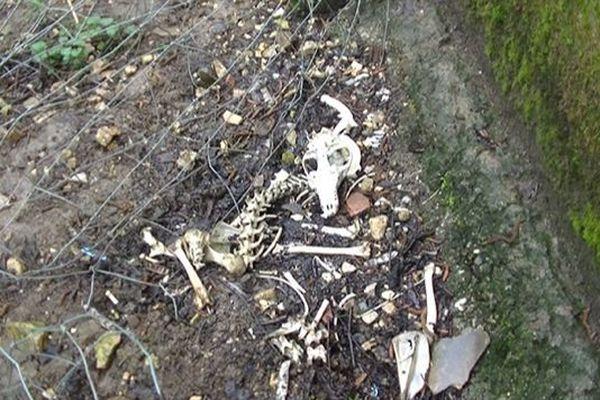 L'association One Voice aurait photographié ces ossements de chiens qui se seraient fait dévorer dans les chenils