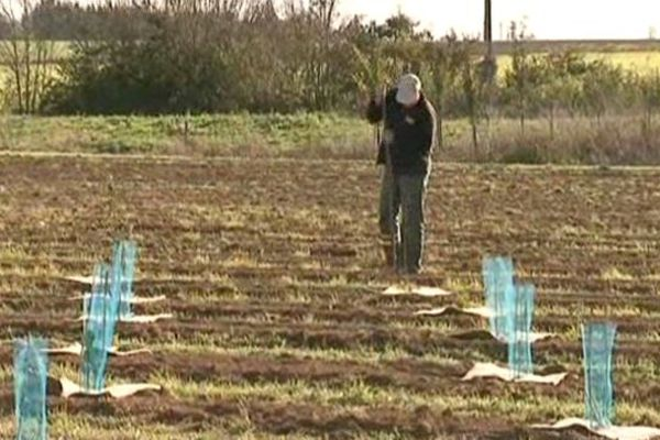 2 000 arbres vont être plantés autour du site de captage de Varaize près de La Rochelle.