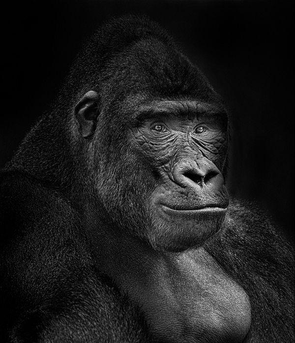 Le Gorille - Coupe de France Papier Monochrome 2020