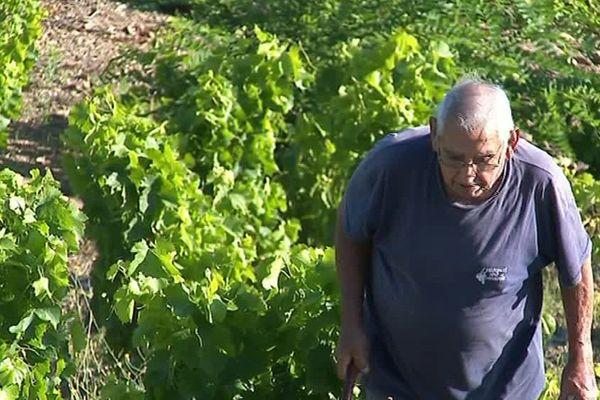 20 à 30 hectares de vignes se perdent chaque année.