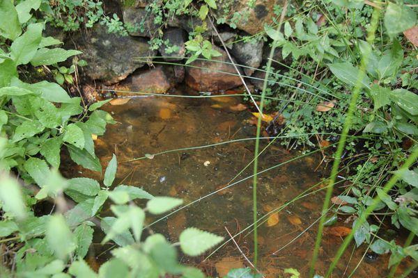 Préservation des zones humides de la Source du Vernet Prades