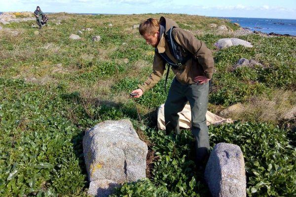Les membres du Groupement ornithologique normand ont procédé à un inventaire des musaraignes des jardins et ont déjà amené de premiers piège à rats sur les îles Chausey, en vue de la dératisation prévue à compter du 21 octobre.