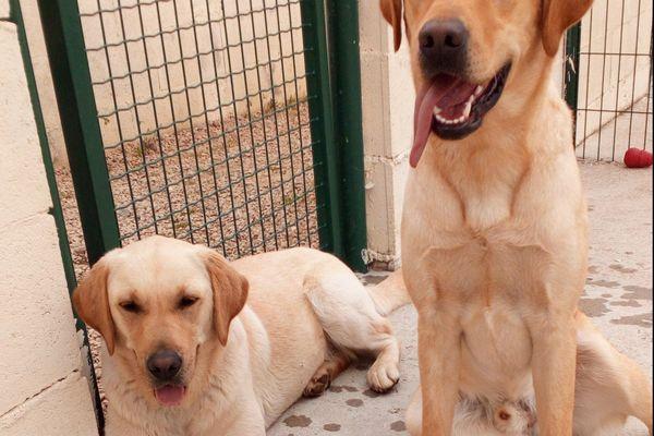 Natcho et Lully  à leur retour au centre d'apprentissage