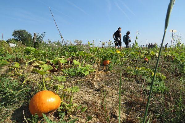La société gérante du marché de Rungis assure qu'une partie du site sera destinée à l'agriculture.