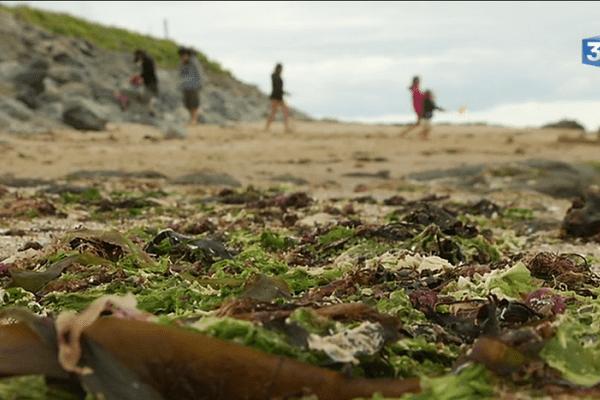 Noirmoutier le débarquement de l'algue verte.
