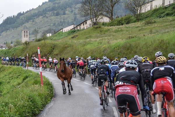Le peloton croise un cheval lors de l'édition 2019.
