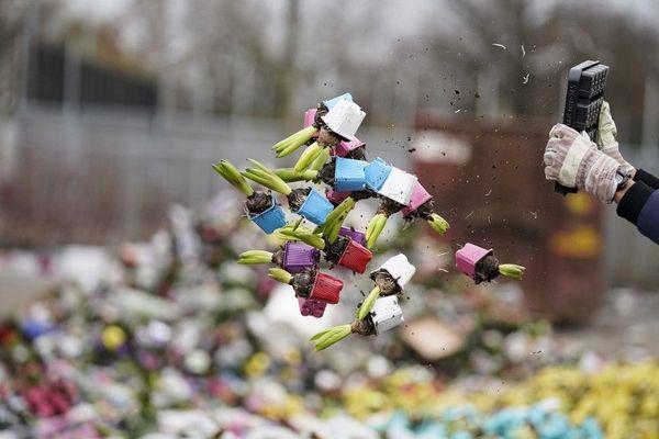 Des fleurs détruites vendredi chez FloraHolland Naaldwijk à Honselersdijk.