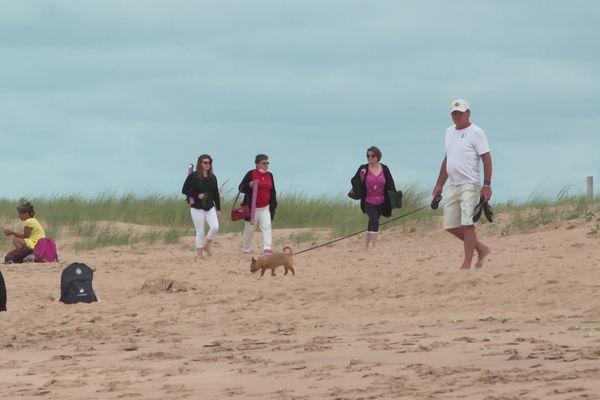 Les chiens sont les bienvenus sur la plage de la Belle Henriette à La Tranche-sur-Mer