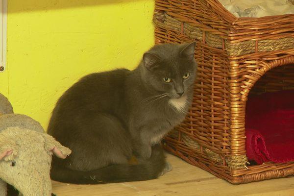 Un des chats recueilli par la SPA Dieppoise