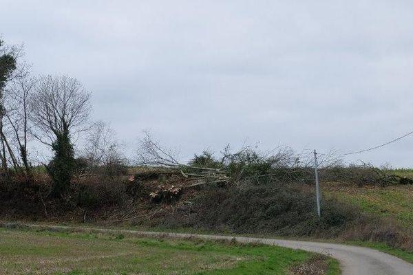 Fibre optique : en Mayenne la coupe des arbres a commencé. Un collectif s'inquiète