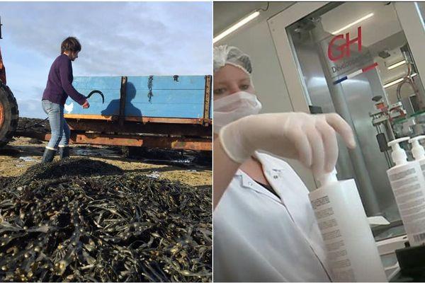 Véronique à gauche ramasse des algues qui serviront à la fabrication de produits cosmétiques
