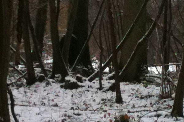 Au fond, derrière les arbres, on devine la cabane dans laquelle l'homme est retranché