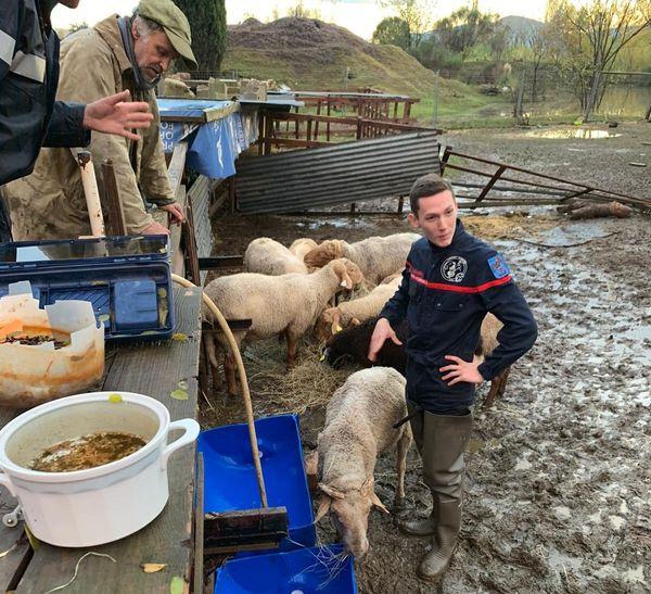 Des moutons isolés chez un berger à Cannes s'étaient naturellement mis en sécurité sur les hauteurs mais avaient besoin d'une aide humaine.