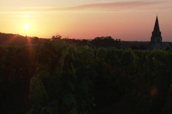 Des balades œnologiques sur le vignoble de Parnay, dans le Saumurois.