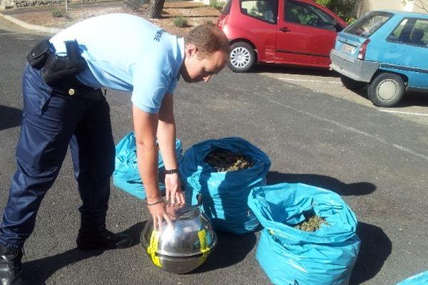 Cazouls-lès-Béziers (Hérault) - saisie de drogue de la gendarmerie - 10 octobre 2012.