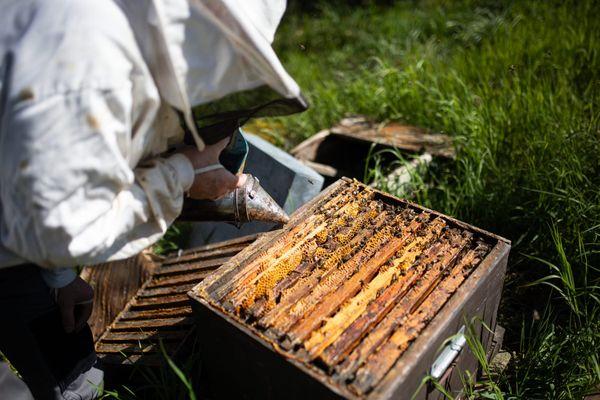 Illustration. Onze ruches ont été volées en fin de semaine dernière sur une exploitation située à Murzo, en Corse-du-Sud.
