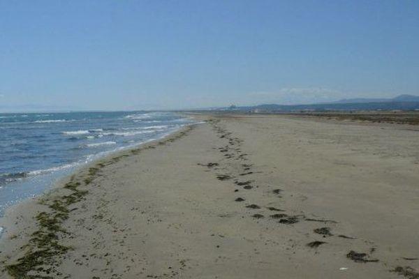 La plage de la Vieille-Nouvelle fait partie intégrale de la réserve naturelle de Port-la-Nouvelle.