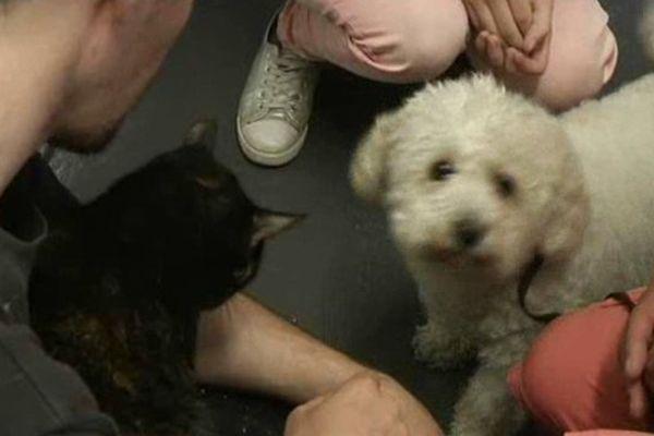 La SPA lance un appel pour adopter les animaux abandonés