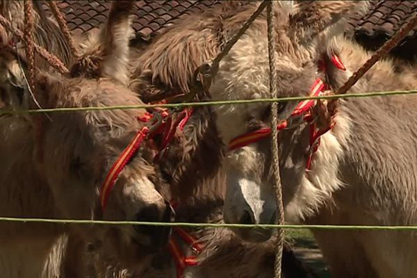 A la Latière, toujours beaucoup d'animaux, mais l'élevage y est de moins en moins représenté, au profit d'autres commerces