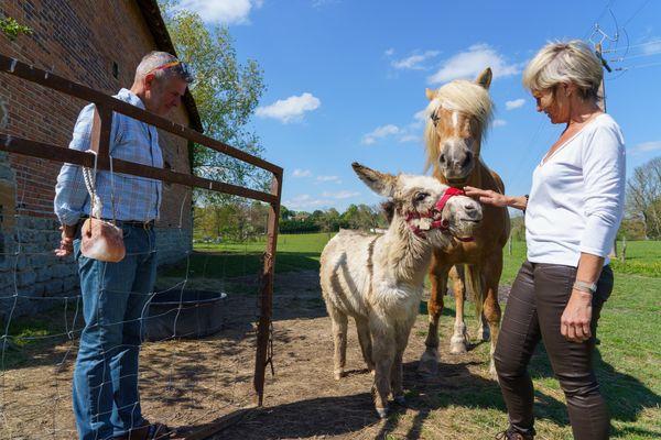 Thierry et Isabelle en compagnie de l'âne Zazou de Bresse et de leur jument