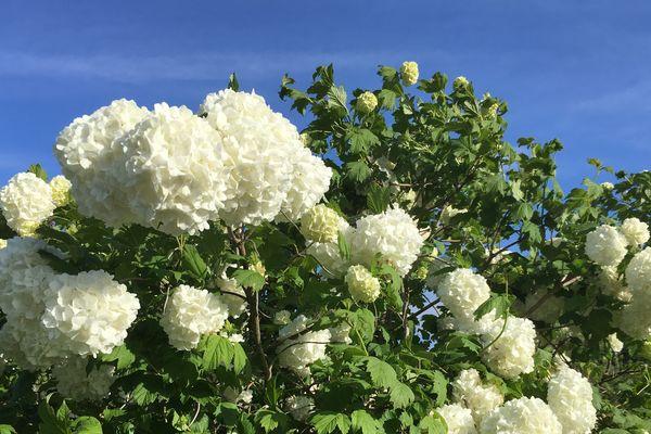 Des fleurs saisonnières, qui voyagent mal... Les horticulteurs de l'Ouest se sont recentrés sur les productions locales pour affronter la concurrence venue de l'étranger.