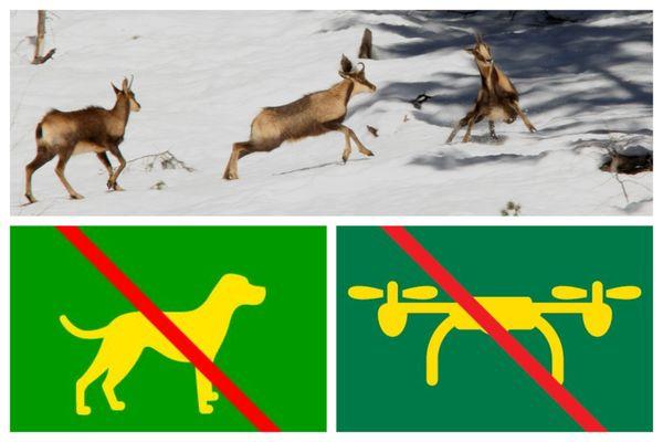 Pour ne pas effrayer les animaux sauvages des Pyrénées, les chiens et les drones sont interdits.