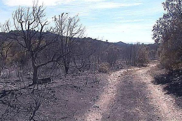 Montalba-le-Château (Pyrénées-Orientales) - le feu a progressé très vite et a détruit 1.100 hectares - 12 août 2016.