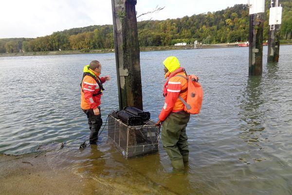 Des scientifiques disposent des casiers remplis d'organismes vivants (crevettes, moules, poissons) pour mesurer la qualité de l'eau.