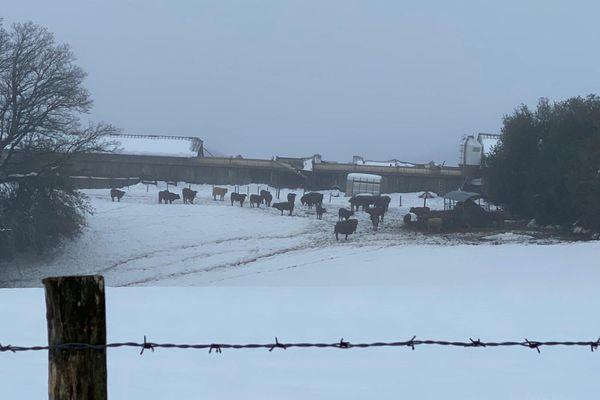 Les troupeaux ne peuvent pas rester longtemps dehors dans la neige et le froid : entre voisins on fait preuve de solidarité.