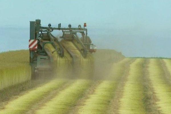 La récolte du lin en Picardie maritime